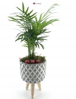 Ayaklı Saksı da Chamaedorea Bitkisi (Dağ Palmiyesi)  çiçek gönder