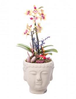 Deus Serisi Mini Sarı Orkide tasarım Orkideler çiçek gönder
