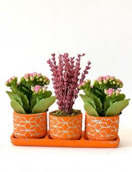 Lavanta ve Kalanchoe İhtişamı  çiçek gönder