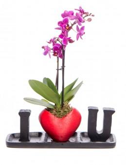 Amore Serisi Orkide Tasarım  çiçek gönder