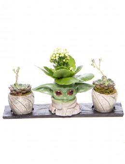 Trio Yoda Serisi Kalanchoe Tasarım  çiçek gönder