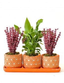 Özel Tasarım 3'lü Bitki Seti.  çiçek gönder