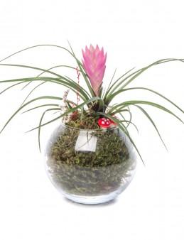 Locuis Serisi Tillandsia Tasarım  çiçek gönder