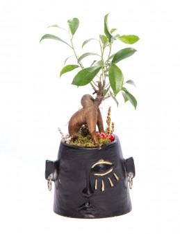 Arati Serisi Ficus Ginseng Bonsai Tasarım  çiçek gönder