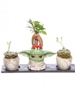 Trio Yoda Serisi Ficus Ginseng Bonsai Tasarım  çiçek gönder