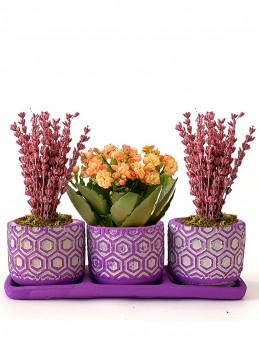 Mis Kokulu Lavantalar ve Kalanchoe Çiçeği 3'lü Set  çiçek gönder
