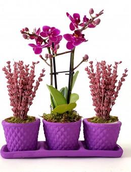 Lavanta ve Mini Orkide'nin Eşsiz Güzelliği Orkideler çiçek gönder