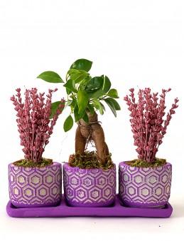 Bonsai ve Lavantaların Güzelliği  çiçek gönder