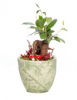 Herba Serisi Ficus Ginseng Bonsai Tasarım  çiçek gönder