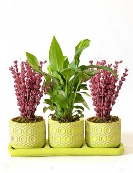 Spathiphyllum ve Lavanta'nın İhtişamı  çiçek gönder