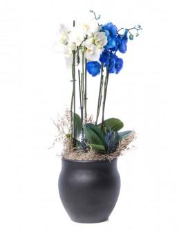 Büyük Orkide Serisi Orkide Tasarım  çiçek gönder