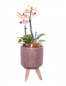 Auctore Serisi Mini Sarı Orkide Tasarım  çiçek gönder