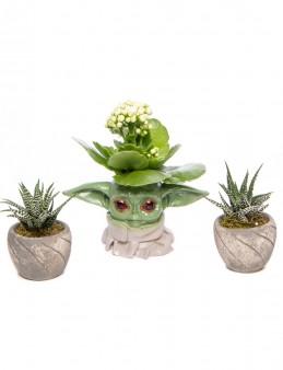Trio Yoda Serisi Kalanchoe ve Howarthia Tasarım  çiçek gönder