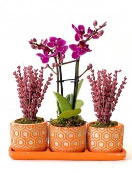 Lavanta ve Orkide İhtişamı  çiçek gönder