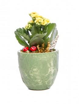 Herba Serisi Kalanchoe Tasarım  çiçek gönder