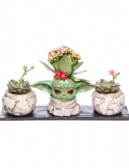 Trio Yoda Dünya Kalanchoe Tasarım  çiçek gönder
