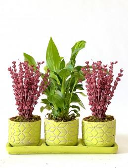 Spathiphyllum  ve Lavantaların Eşsiz Dansı  çiçek gönder