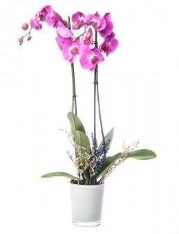 Eddar Serisi Mor Orkide Tasarım  çiçek gönder