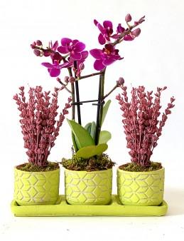 Özel Tasarım Mini Orkide ve Lavanta Seti Orkideler çiçek gönder