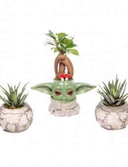 Trio Yoda Dünya Serisi Ficus Ginseng Bonsai Tasarım Saksı Çiçekleri çiçek gönder
