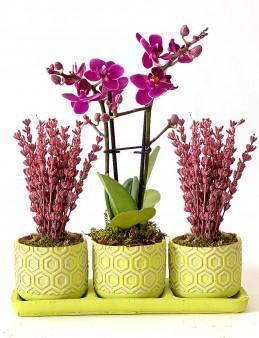 Mis Kokulu Lavantalar ve Minyatür Orkide  çiçek gönder