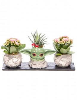 Trio Yoda Dünya Serisi Howarthia Tasarım  çiçek gönder