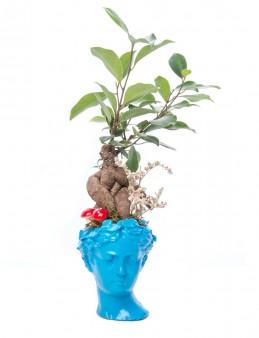 Mini Hero Ficus Ginseng Bonsai Tasarım  çiçek gönder