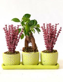 Özel Tasarım  Bonsai ve Lavanta Aranjmanı  çiçek gönder