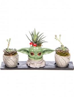 Trio Yoda Serisi Howarthia Tasarım  çiçek gönder