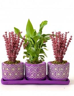 Mis Kokulu 3'lü Bitki Seti  çiçek gönder
