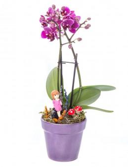 Opal Serisi Mini Mor Orkide Tasarım  çiçek gönder