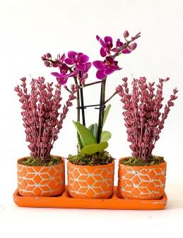 Kalanchoe ve Mini Orkide Aranjmanı  çiçek gönder