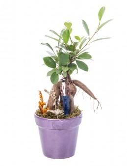 Opal Serisi Ficus Ginseng Bonsai Tasarım  çiçek gönder