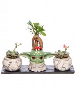 Trio Yoda Dünya Serisi Ficus Ginseng Bonsai Tasarım  çiçek gönder