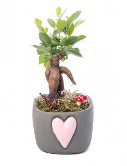 Cuore Serisi Ficus Ginseng Bonsai Tasarım  çiçek gönder