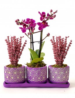 Orkide ve Lavantaların Uyumu Orkideler çiçek gönder