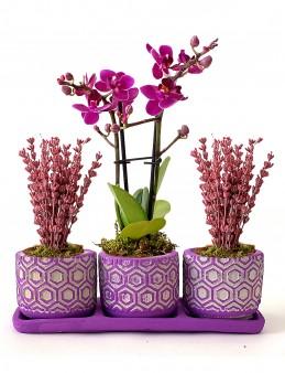 Orkide ve Lavantaların Uyumu  çiçek gönder