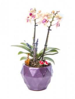 Geometric Serisi Mini Sarı Orkide Tasarım  çiçek gönder