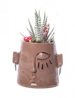 Arati Serisi Howarthia Tasarım  çiçek gönder