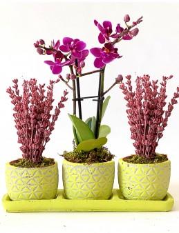 Bir Tek Sen Vip Bitki Seti  çiçek gönder