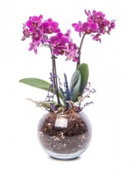 Locuis Serisi Mor Orkide Tasarım  çiçek gönder