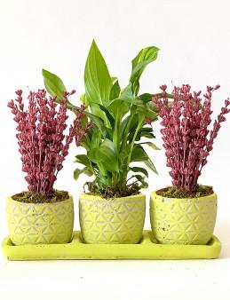 Özel Tasarım 3'lü Vip Set  çiçek gönder