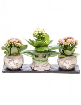 Trio Yoda Dünya Serisi Kalanchoe Tasarım  çiçek gönder