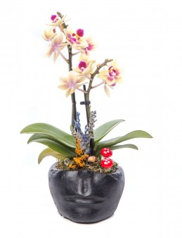 Curabitur Serisi Mini Sarı Orkide Tasarım  çiçek gönder