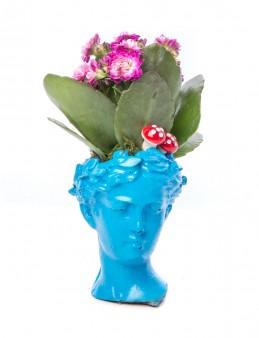 Mini Hero Serisi Kalanchoe Tasarım  çiçek gönder