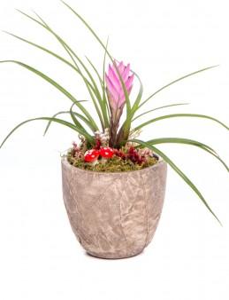 Wood Herba Serisi Tillendsia Tasarım  çiçek gönder
