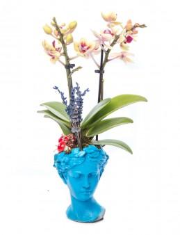 Mini Hero Serisi Mini Sarı Orkide Tasarım  çiçek gönder