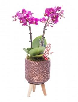 Auctore Serisi Mini Mor Orkide Tasarım  çiçek gönder