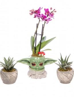 Trio Yoda Serisi Mini Mor Orkide ve Sukulent Tasarım Orkideler çiçek gönder