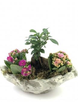 Doğa Harikası Bonsai ve Kalanchoe   çiçek gönder